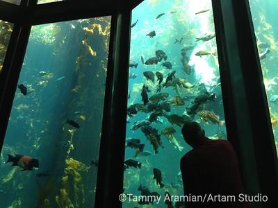 Monterey Bay Aquarium 2013