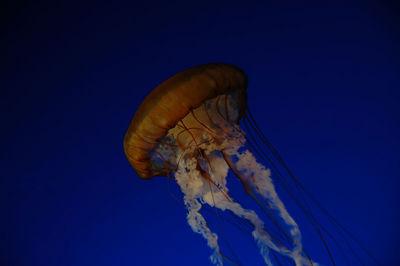 Jellyfish  Monterey Bay Aquarium  February 2005