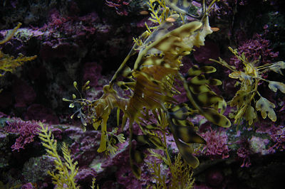 Monterey Bay Aquarium  February 2005