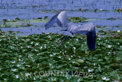 2008 Montezuma Wildlife Refuge-18