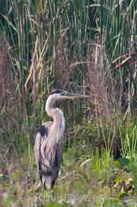 2008 Montezuma Wildlife Refuge-173