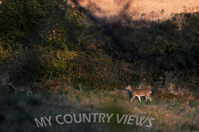 2008 Montezuma Wildlife Refuge Fall-299
