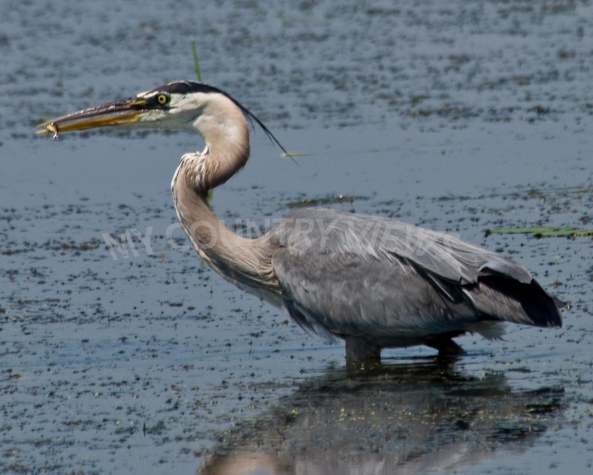 2008 Montezuma Wildlife Refuge-82