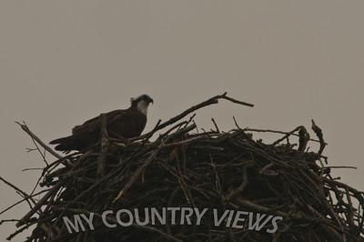 2008 Montezuma Wildlife Refuge-128