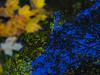 Autumn Reflection Pool