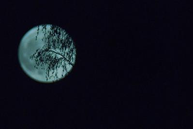Superkuu, 840mm hieman rajattu kuvaa. Super Moon, I cropped a bit the photo  Pihlajamäki, Helsinki, 2012