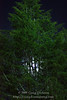 Full moon through tree