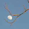 Waxing Gibbous Moon - 83% of full<br /> January 22, 2013