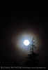 Moon and tree branch (2)