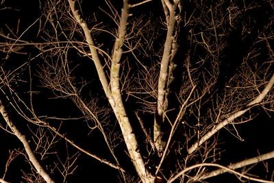 Moonlight 2009-5574
