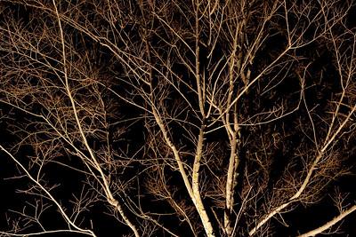 Moonlight 2009-5573
