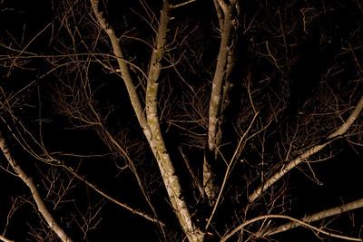 Moonlight 2009-5575