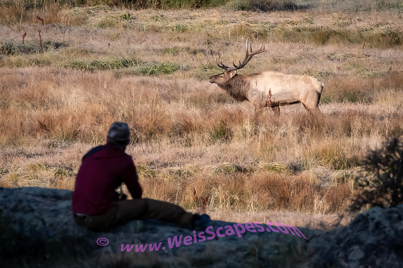 Watching th Elks atsunrise, Rocy Mountain National Park, Moraine Meadow.