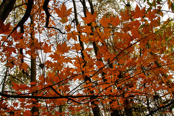 More 2012 Midland County Color