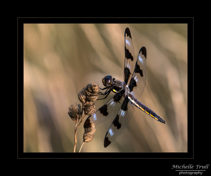 Dragonflies at Monson-0626 200 dpi