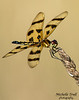 Dragonflies at Monson-0563-Recovered
