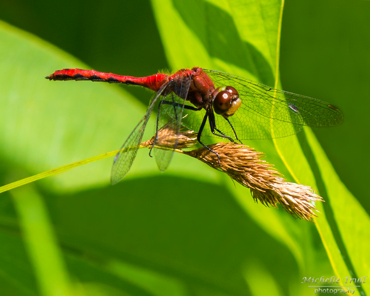 Dragonflies and Frogs-0823
