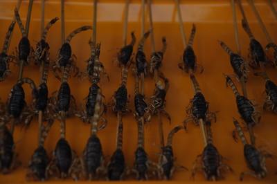 Scorpion Kabobs Beijing 2009