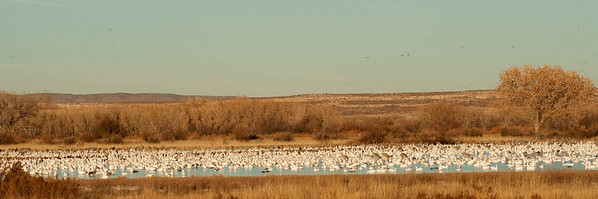 as panoramic as this image is., there were lots more birds on both sides.