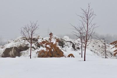 Morgan Arboretum Photo Walk