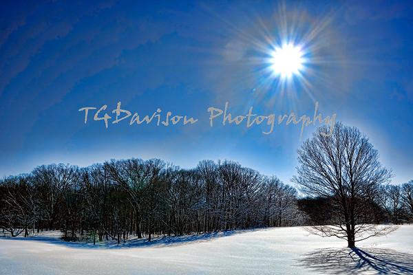 Morton Arboretum Snowstorm hike