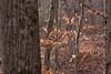 MOSAIC Devils Den Hike-5108