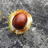Luxembourg_horse chestnut_Sept 2012