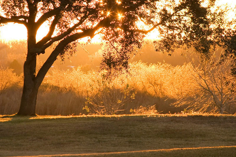 No birds here, just golden sunlight warming the grasses and trees at Nassau Bay Park<br /> - January 2008