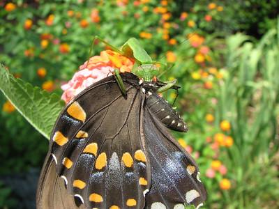 Mostly Moths & Butterflies