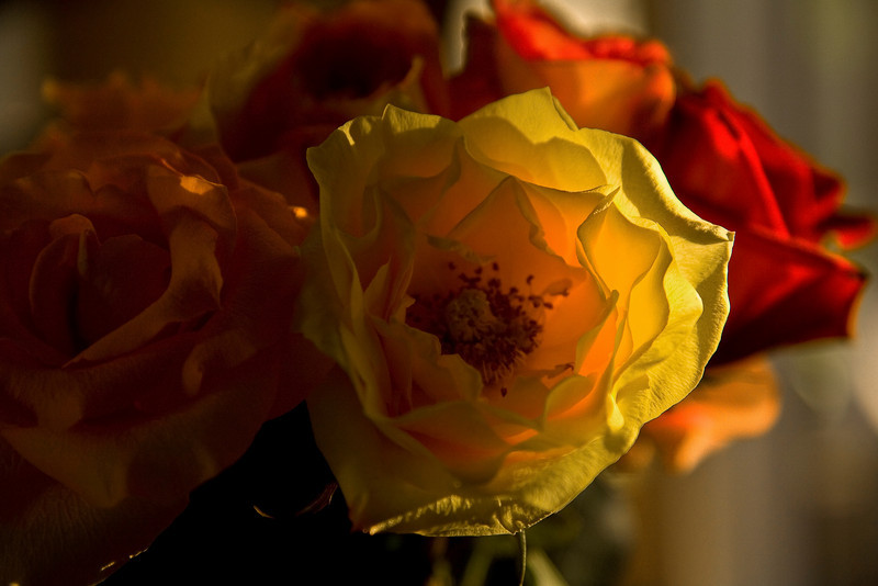 "Flowers for Mother from Son - Mother's Day Re-visited - Raleigh photography for all occasions -- <a href=""http://globalvillagestudio.com/index.html"">http://globalvillagestudio.com/index.html</a>"