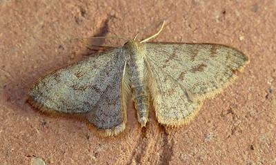 Moths 2015