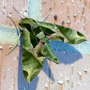 Moths - 2016