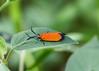 4626 Neoalbertia constans moth<br /> Patagonia Sonoita Creek Preserve