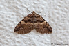 Variable Carpet Moth<br /> Anticlea vasiliata<br /> Jefferson Hills, PA