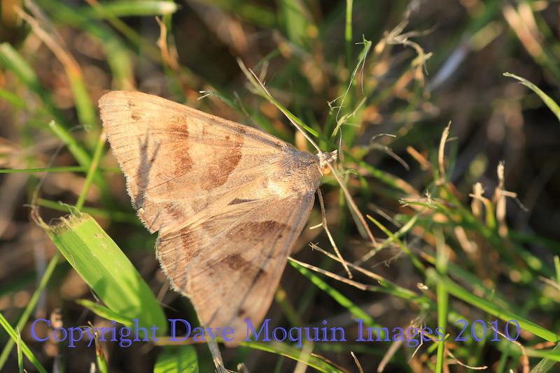 Moth- Yard