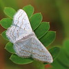 Moth- Big Thicket National Preserve