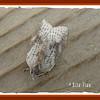 3748 White-line Leafroller ( Amorbia humerosana)