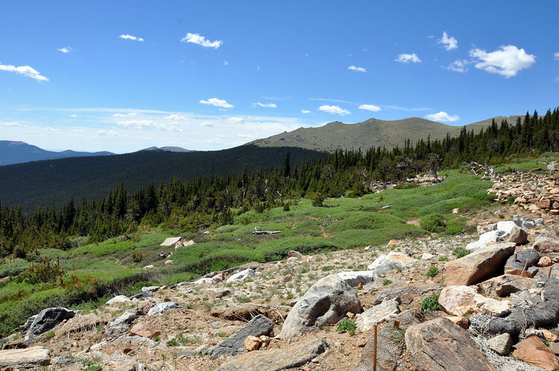 "The entrance to the Mount Evans Recreation area is less than 50 miles from downtown Denver. This is the Mount Goliath Research Natural Area, elevation 11,540 ft., where Rocky Mountain Bristlecone Pine are studied and protected.<br />  <a href=""http://www.mountevans.com"">http://www.mountevans.com</a>"