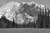 Mount Rainier 18 Grand Park N BW