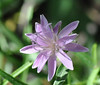 purple flower_DSC_0438