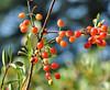 red fruit_DSC_0346