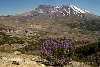 View of Mt. St. Helens from the Loowit Viewpoint.  Photo taken in July 2017.