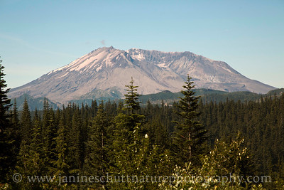 View of Mt. St. Helens from the Bear Meadow Interpretive Site, 10 miles northeast of the volcano.  This is the spot from which the famous photos of the beginning of the May 18, 1980 eruption were taken.  Photo taken in June 2015.