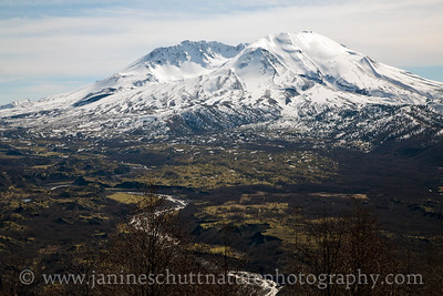 View of Mt. St. Helens and the Toutle River from the Castle Lake Viewpoint.  Photo taken in March 2017.
