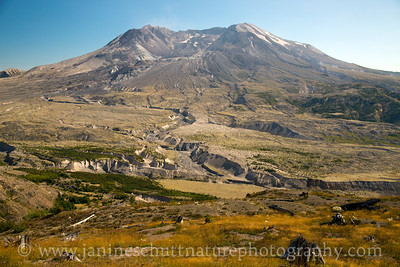 View of Mt. St. Helens from the Johnston Ridge Observatory.  Photo taken in September 2014.