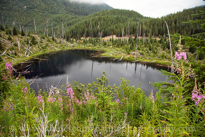 Ryan Lake, located within a working forest about a mile north of the east side of the monument.  While the surrounding area was replanted after the 1980 eruption, the perimeter of Ryan Lake was left to heal naturally.  Photo taken in July 2015.