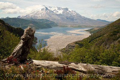 View of Mt. St. Helens and Spirit Lake from Norway Pass.  Photo taken in June 2016.