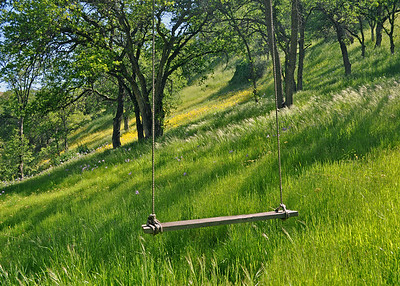 Swing in the Meadow - Sierra Foothills