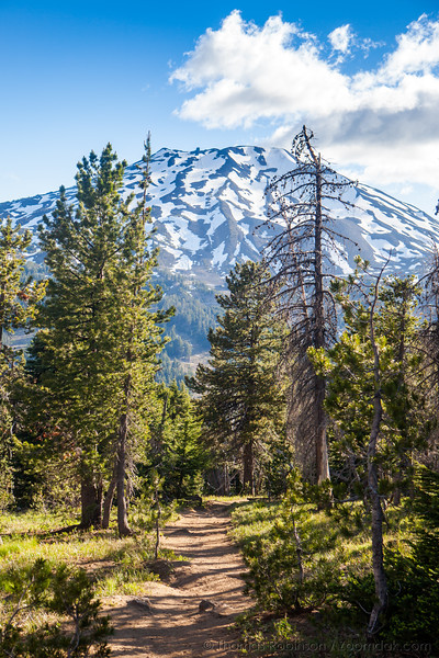 Trail to Mt. Bachelor