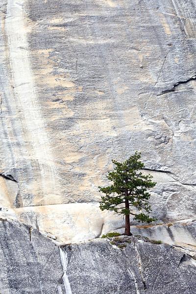 Tree and Granite 3